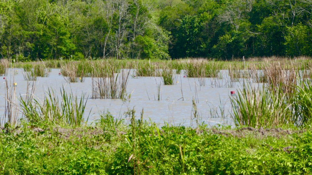 Alligators Snakes and Mosquitos Deep South USA Swampland - knee deep in alligators, snakes and mosquitos.