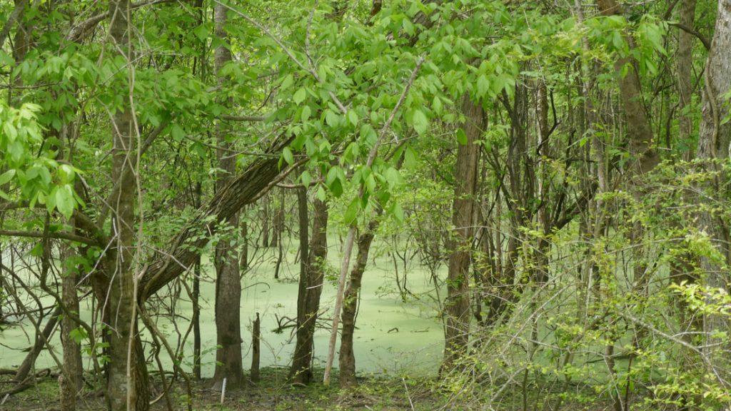 Just Visiting Swampland Deep South USA