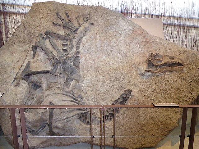 Dinosaur National Monumen Allosauraus Jammadseni