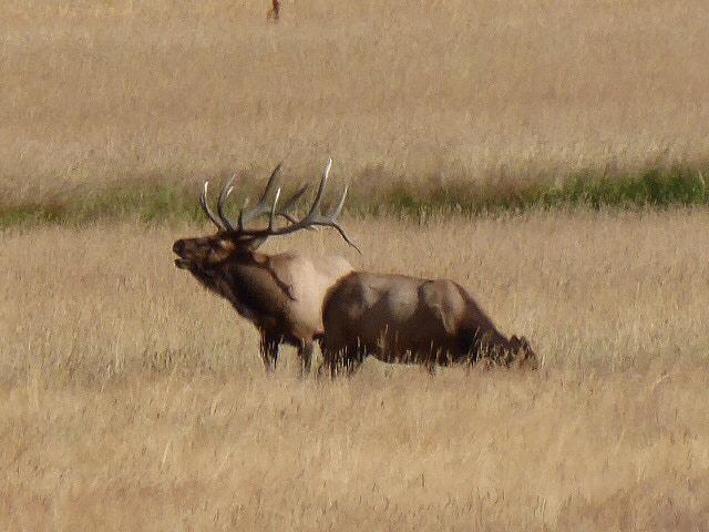 Cub Lake Fern Falls Bugling Elk RMNP