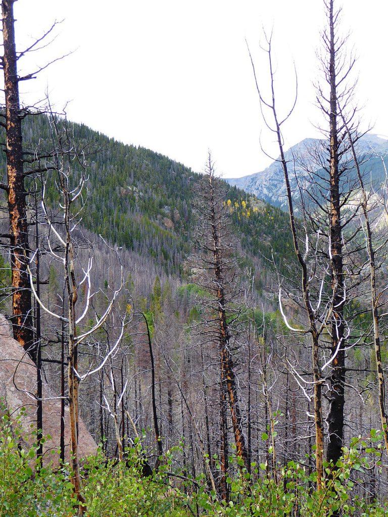 Cub Lake Fern Falls RMNP Fire damaged trees RMNP