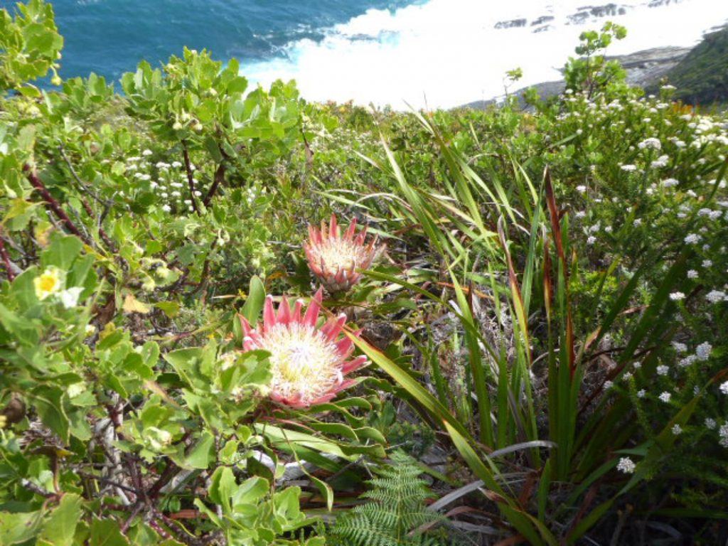 Tsitsikamma Ocean Fynbos