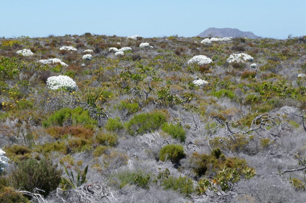 Peninsular Tour to the Penguins Everlasting Flowers Cape Town