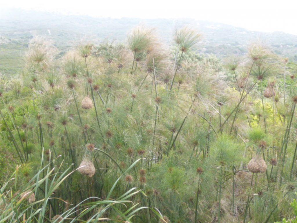 Walker Bay Birds nest in the fynbos