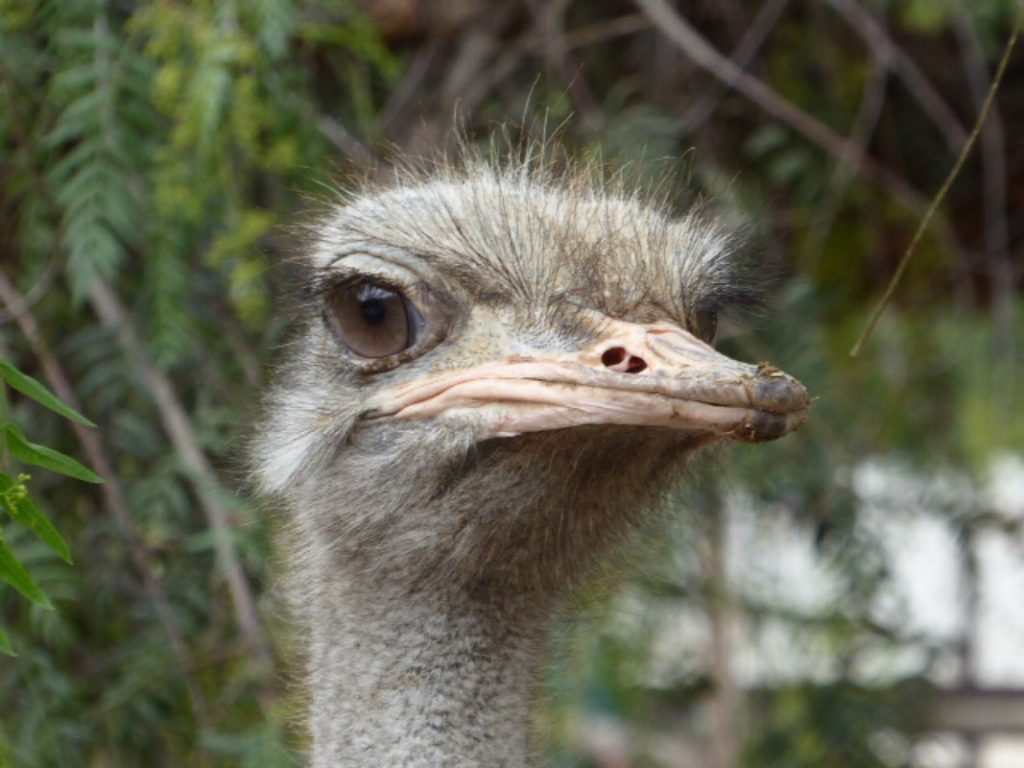 Oudtshoorn Caves and Ostriches Up Close and Persona