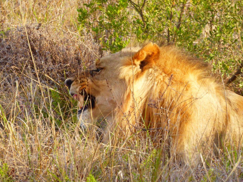 Arrival at Shamwari Game Reserve By-ye-thi Shamwari Lodge Lion Teeth