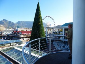 Fun in the Fynbos – Christmas in Cape Town