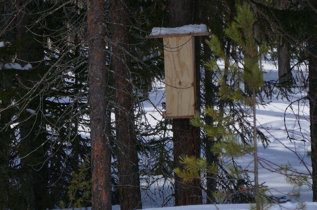 Can this get any worse? Another empty nest box
