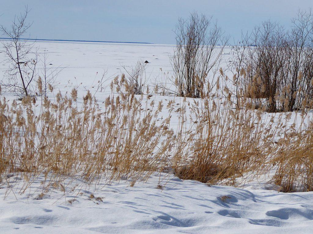 Owless Oulu Finland Gulf of Bothnia - Frozen Sea