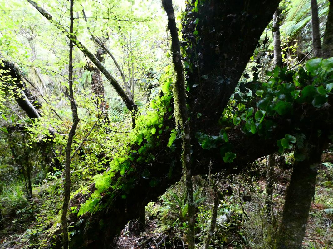 Franz Josef to Wanaka Fifty Shades of Green
