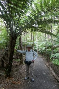 The Temperature is Rising Hot Water Beach Silver Tree Fern (Ponga)