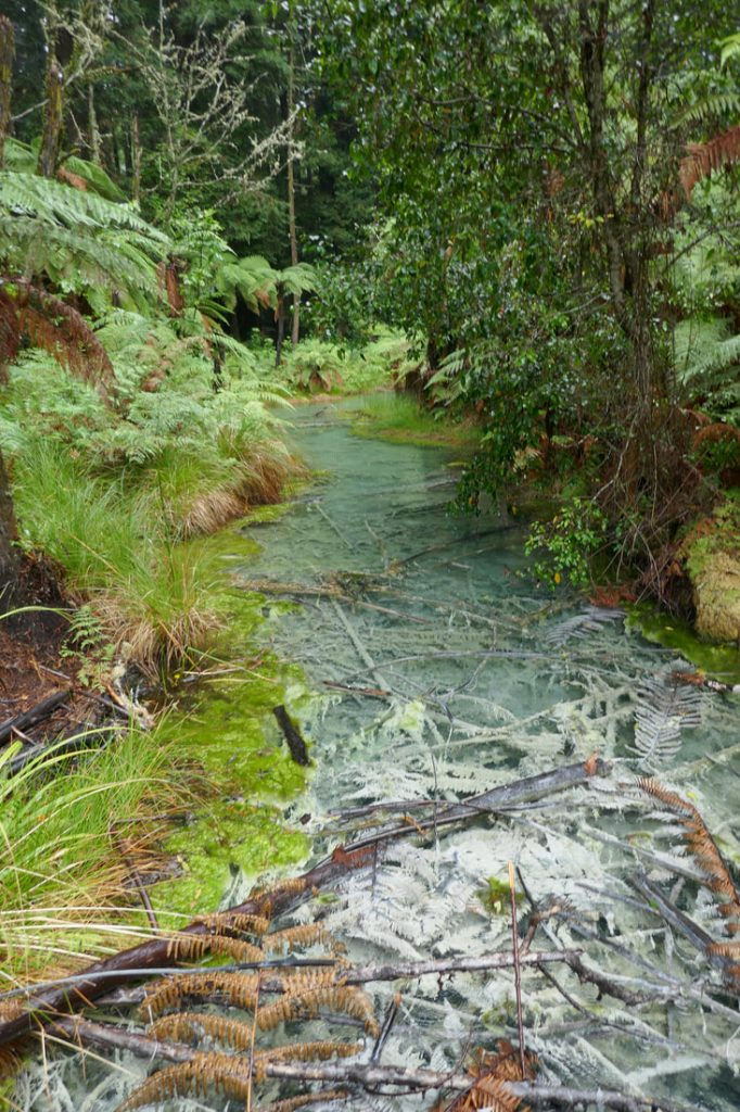 Forest stream - Redwood Forest
