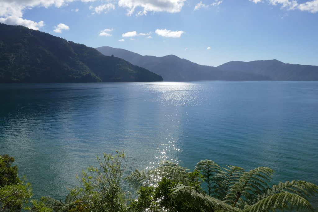 Punga Cove Resort View