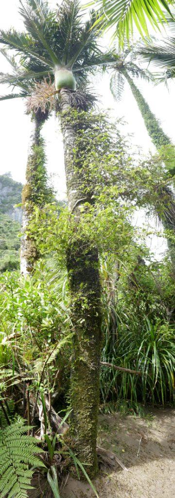 Pororari River Tramp Nika Palm