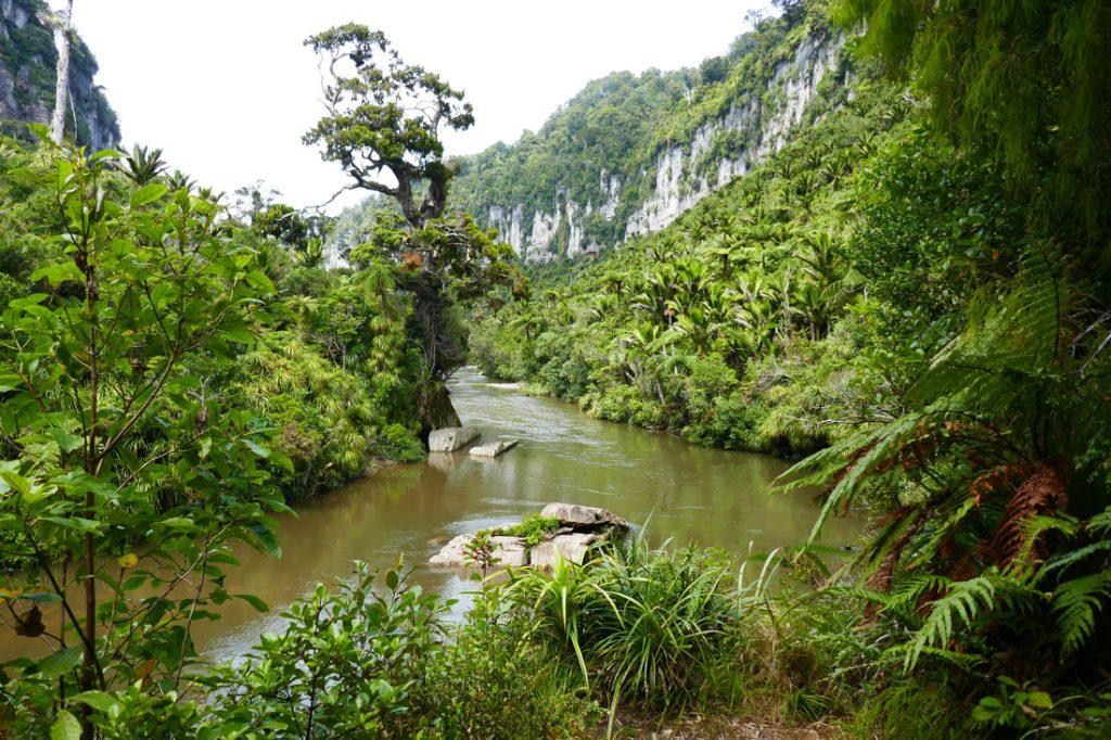 Pororari River Track - Rainforest Walk