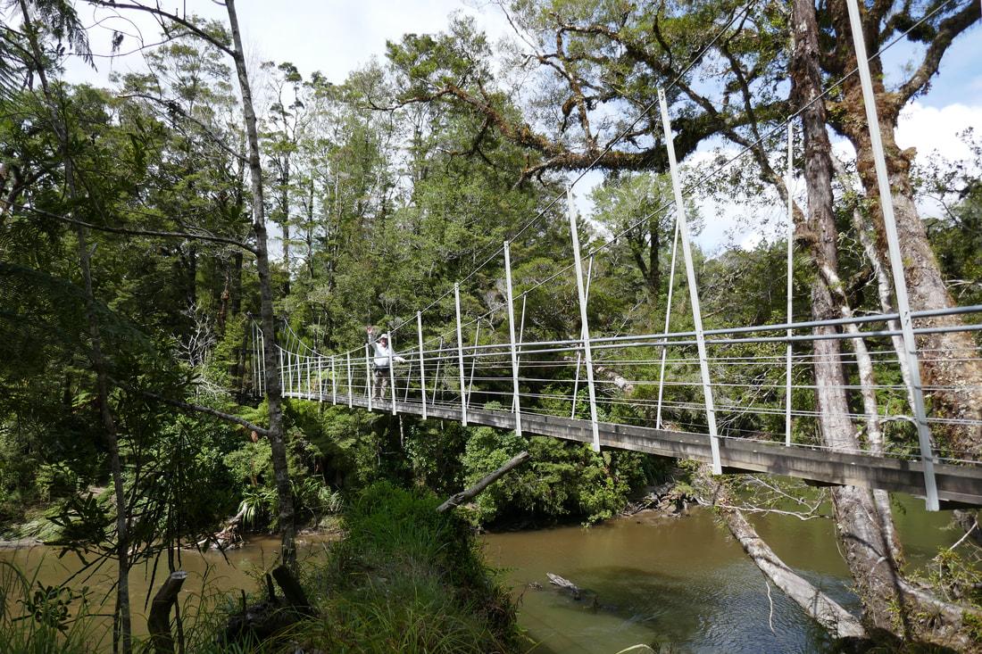 Pororari River Tramp - Swingbridge