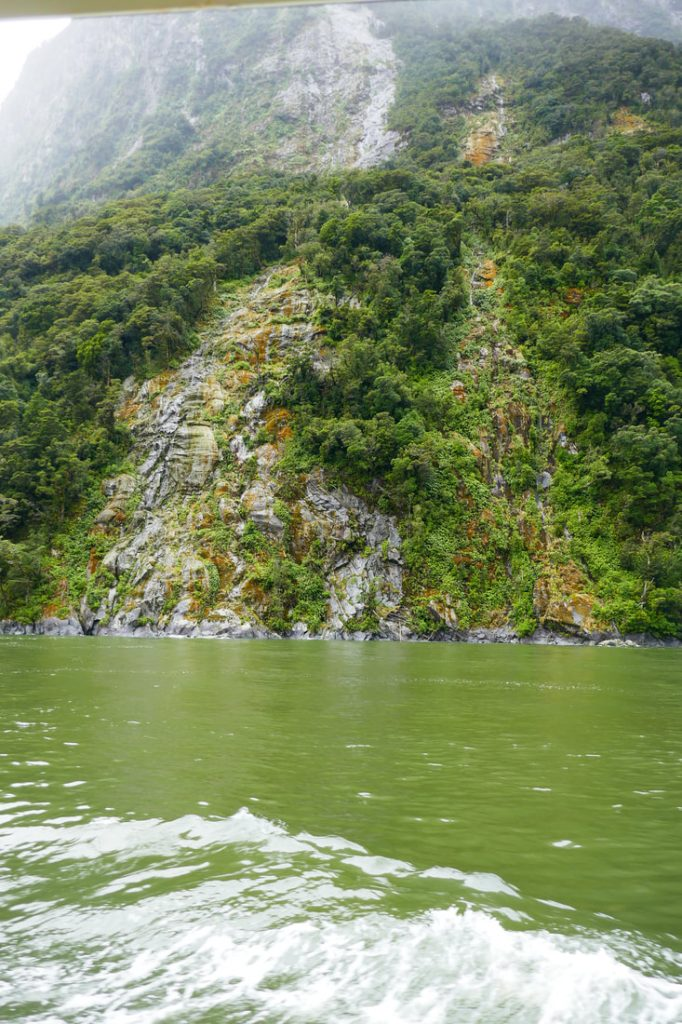 Wairarapa ... Learning the Lingo in Milford Sound site of a tree avalanche