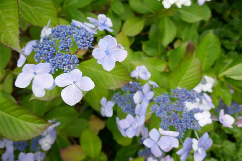 Aultbea to Shieldaig Inverewe Gardens Poolewe