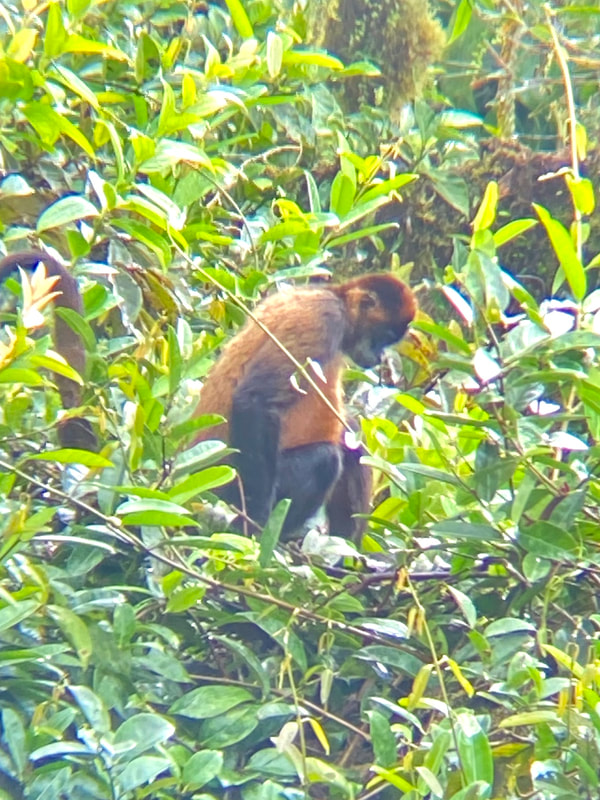 Arenal Volcano National Park Costa Rica Spider Monkey