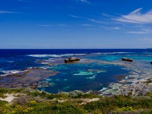 "Rottnest Island – ""I will survive"""