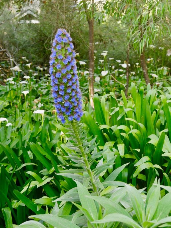 WA Flora Cape Lodge Grounds WA