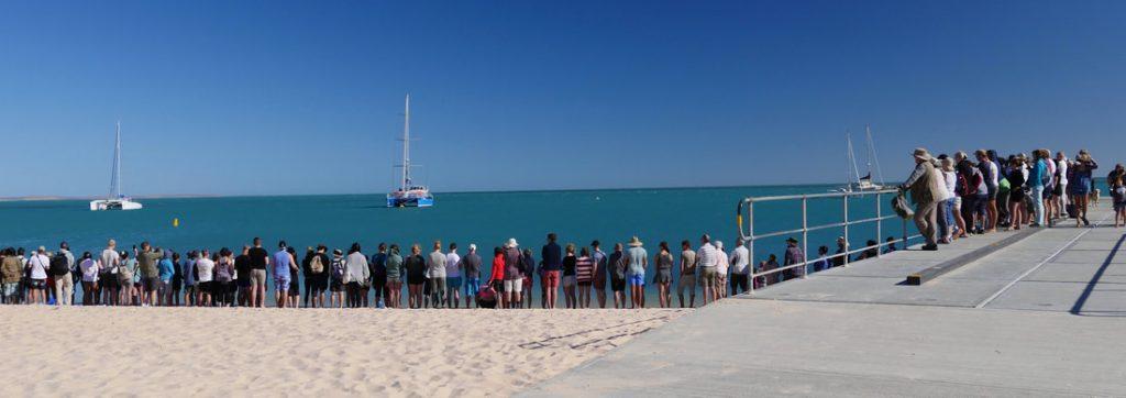 Monkey Mia Shark Bay Waiting for the Dolphins - Monkey Mia Resort