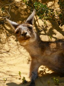 4 Weeks in Western Australia – The Road Less Travelled