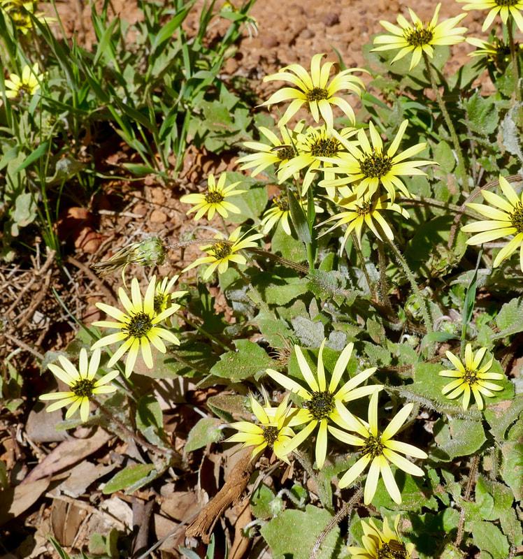 Perth to Mandurah WA WA Flora