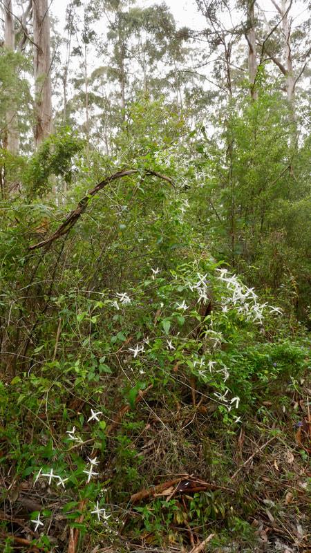 Pemberton WA Flora Karri Valley WA