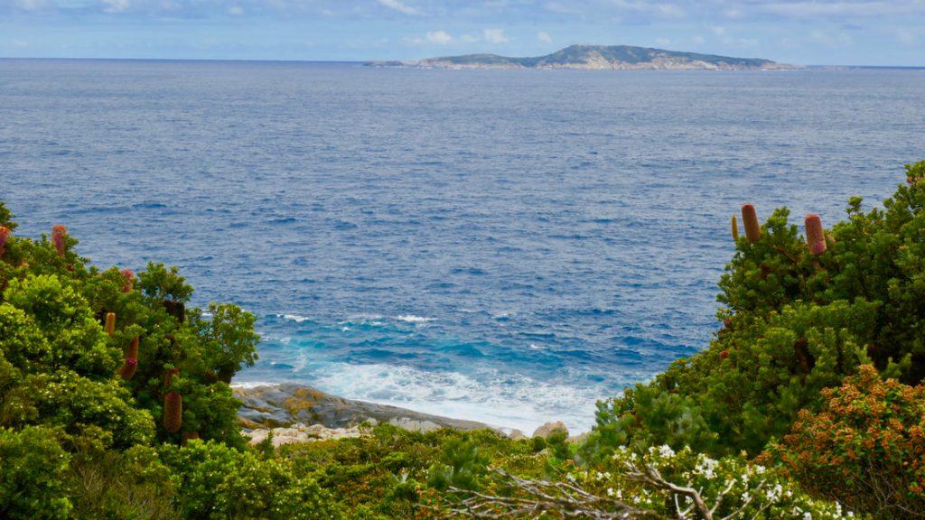 Banksia Blowholes Torndirrup NP WA
