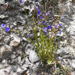 Albany to Bremer Bay WA Flora Stirling Range NP WA