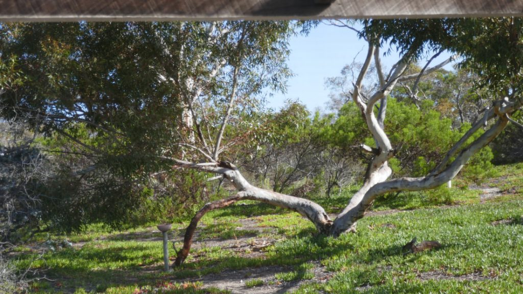 Quaalup Homestead Wilderness Retreat WAGrounds