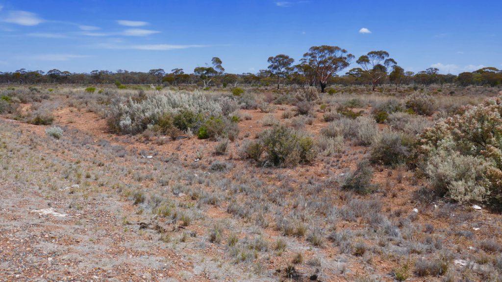 #Driveyourselfwild The WA Outback
