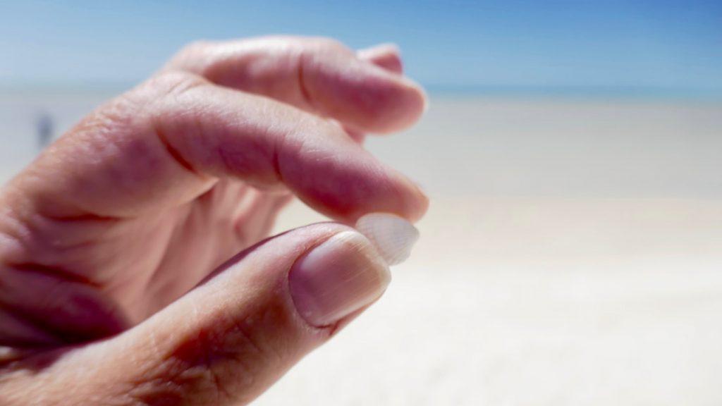 Geraldton to Monkey Mia Fragrum Cockle - Shell Beach WA