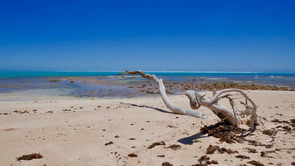 Coral Bay to Exmouth Trealla Beach WA