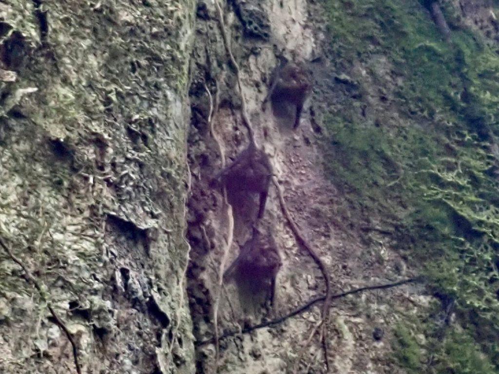 Arenal Volcano National Park Costa Rica Bats