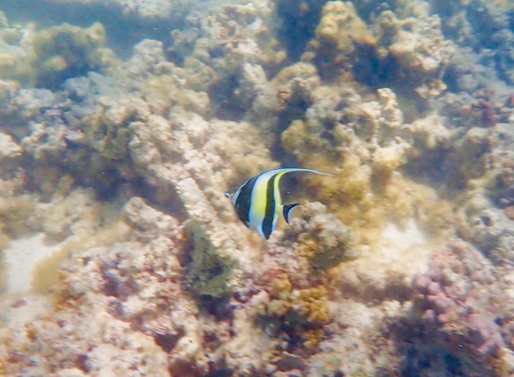 Sal Salis WA - Snorkelling