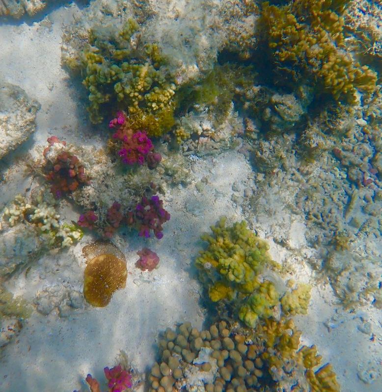 Staghorn Coral Sal Salis WA - Snorkelling