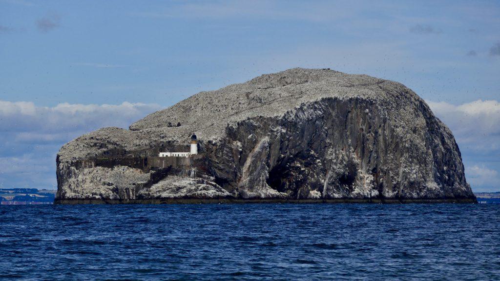 Seabirds on Bass Rock Northumberland