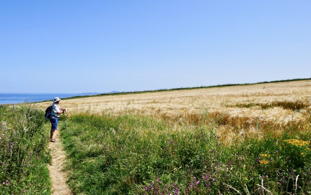 Coasteering North Pembrokeshire Coastal Path Fields of Barley