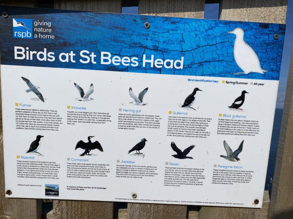 Saint Bees Sea birds