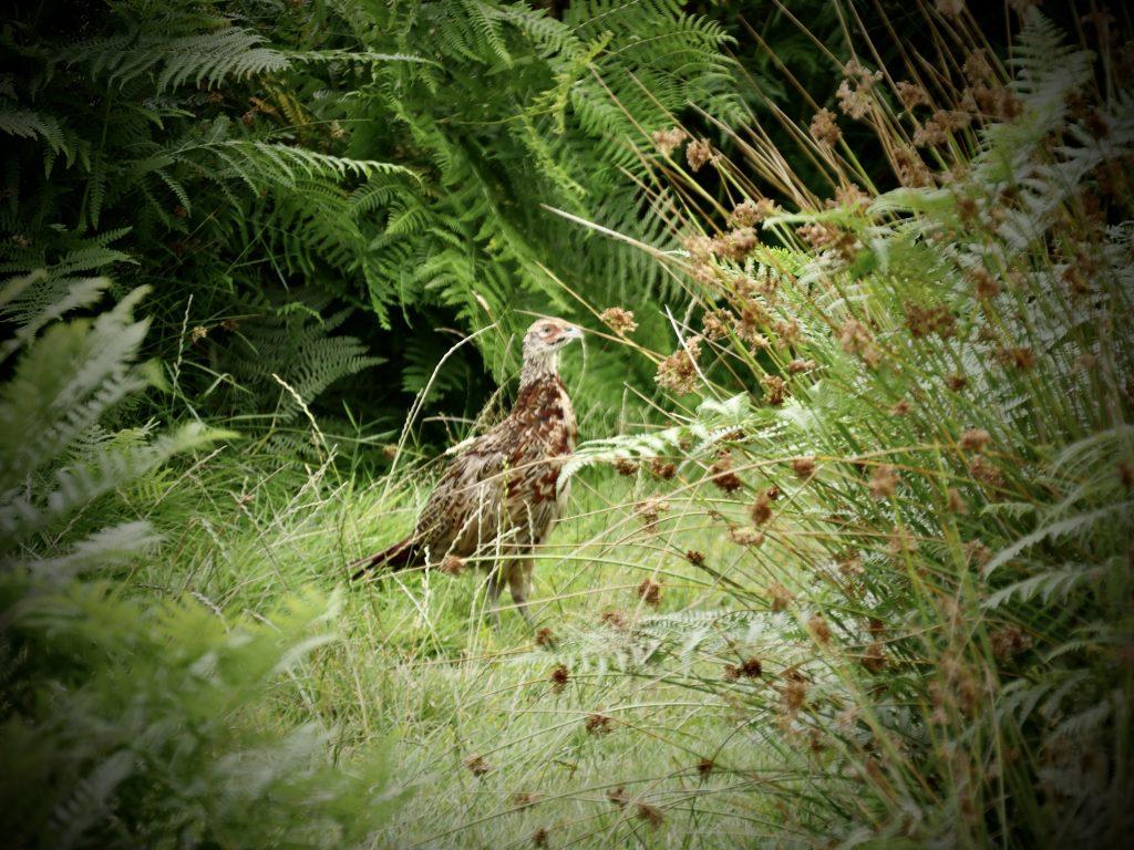 Ravenglass - The Famous Grouse