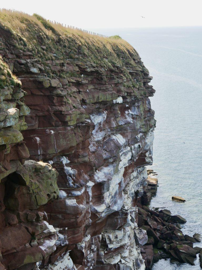 Saint Bees Seabirds on the Cliffs